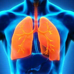 3D image or respiratory system and lungs