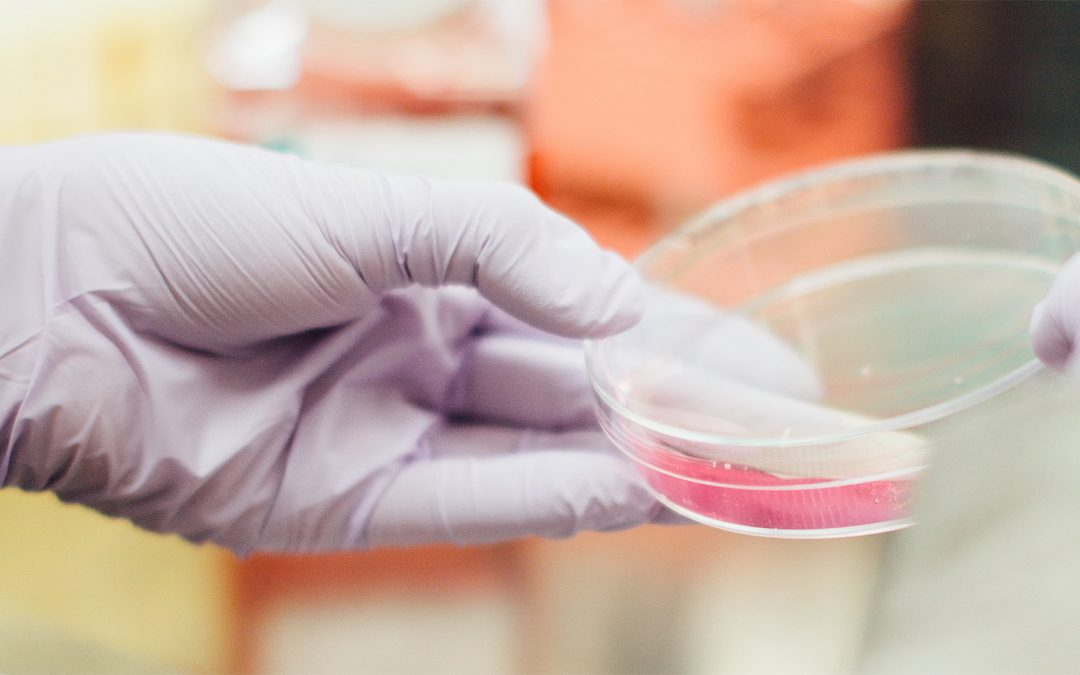 What are Stem Cells and How Do They Work